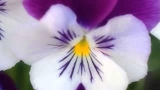 Aaina Aaina Tere [Full Song] (HD) - Ravan Raaj