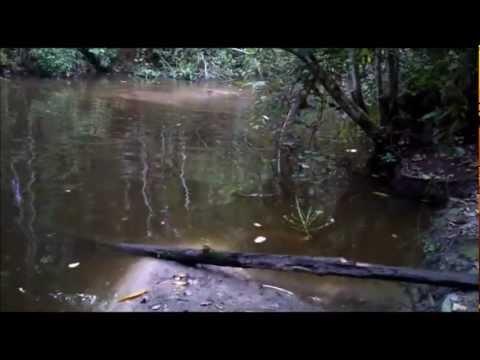tangkap ikan keli seberat 18kg by K.P.T