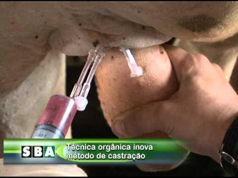 Castração Orgânica de Bovinos