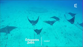 Hawaii l'autre rêve américain - Echappées belles