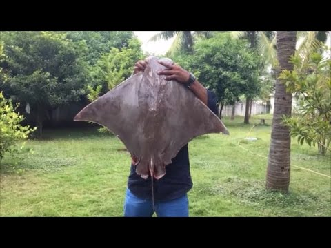 Cooking a 40 Pound Stingray in My Village Cooking a Big Stingray My Village My Food