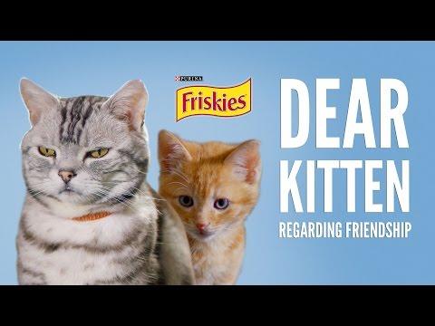 Dear Kitten Regarding Friendship