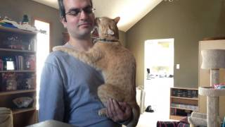Cat Acts Like a Baby - Again :)