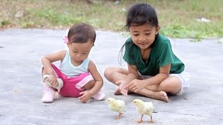 shanti pertama kali bermain dengan anak ayam - fun with new baby chicks