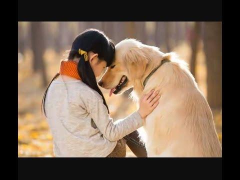 Xxx Mp4 कुत्ते की अजब गजब लव प्रेम कहानी True Love Story Two Dog 3gp Sex