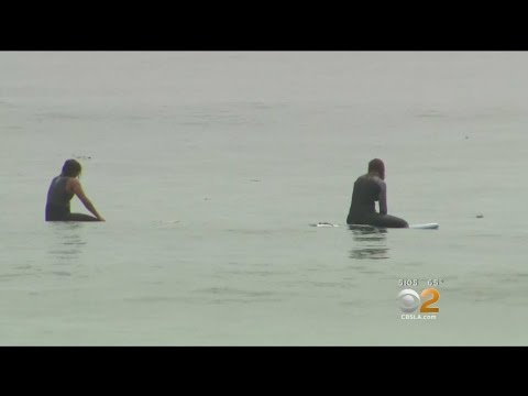 Surfers Report Encountering Aggressive Great White Near San Onofre