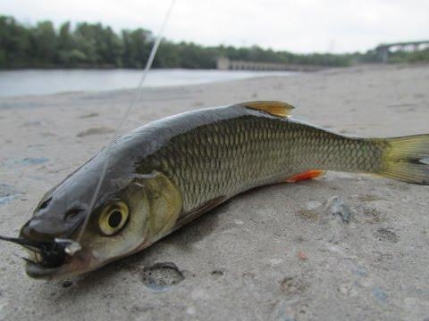 ловля рыбы в реке днепр в г запорожье