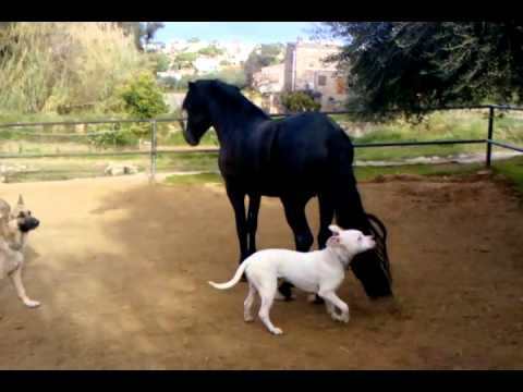 Xxx Mp4 Dogo Argentino Play With Horse 3gp 3gp Sex