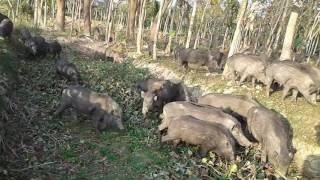 দেখুন কিভাবে সুহারের চব্বরি দিয়ে কোকা কোলা পেপসি বানানো হয় 3