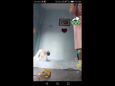 Xxx Mp4 Sexy Girl Having Fun With Dog 3gp Sex