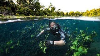 Exploring CLEAR River Hidden Deep In A SWAMP!! (alligators)