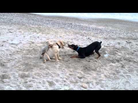 Xxx Mp4 Crazy Dogs Playing Xxx 3gp Sex