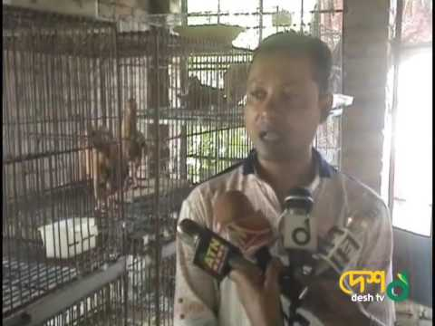 শুধু কবুতর পালন করে ১ বছরে দশ লক্ষ টাকা আয় করেছেন যে ভাবে।10 lakh Make Money Earn From Pigeons Farm