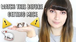 💡🐁 20 THINGS YOU SHOULD KNOW BEFORE OWNING MICE 🐁💡
