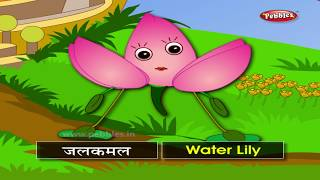 Flowers For Babies | Flower Names in Hindi | Learn Flowers in English & Hindi | Colors With Flowers