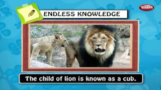General Knowledge For Children Class 5 | GK Question Answers Kids | Gk Tricks | General Knowledge
