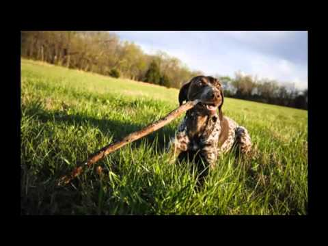 Xxx Mp4 Top 10 Best Dog Breeds For Hot Weather In The World Cute Dog 3gp Sex