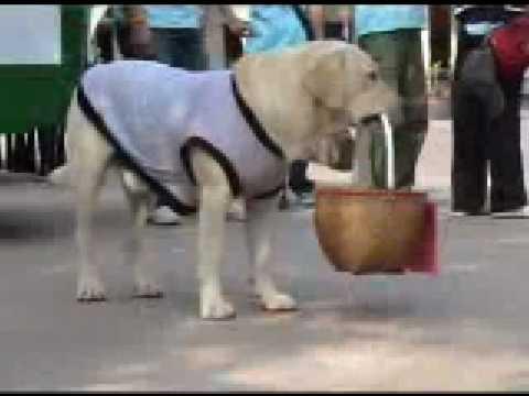 คุณโจ สุนัขแสนรู้ วัดป่าบ้านค้อ