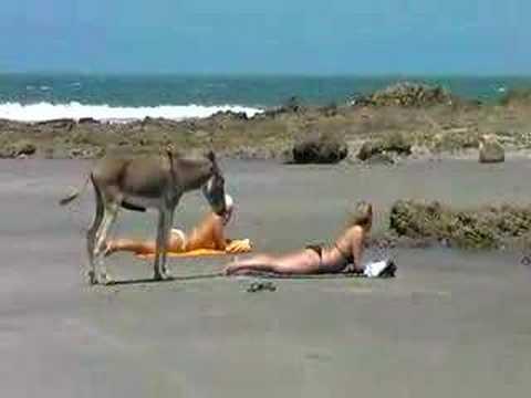 Geiler Esel