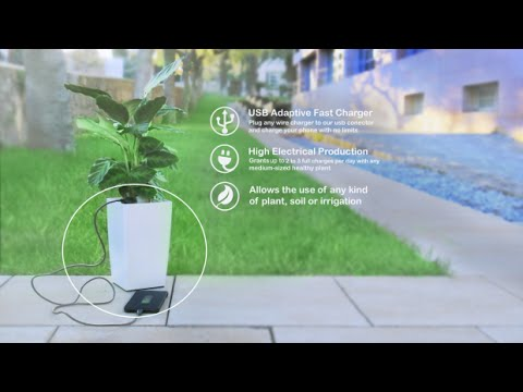 Xxx Mp4 Charge Your Smartphone With A Plant 3gp Sex