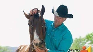 Curso Aprenda a Montar e Lidar com Cavalos - Cursos CPT