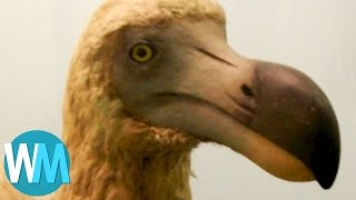 Top 10 Animals That Are Now Extinct Because of Humans