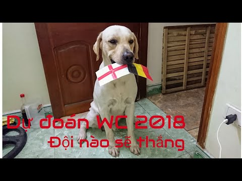 Xxx Mp4 Củ Cải Dự đoán Bán Kết World Cup 2018 Bi Pháp Và Anh Croatia 3gp Sex