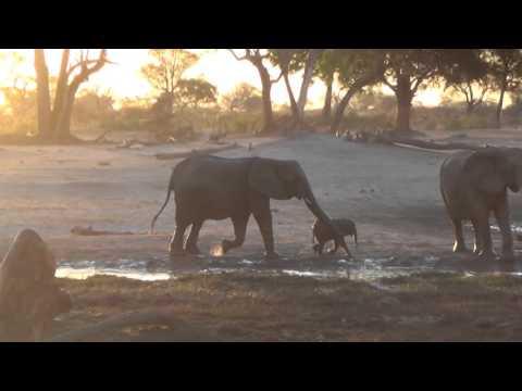 Xxx Mp4 An Elephant Baby Isn39t Done With A Mud Bath 3gp Sex