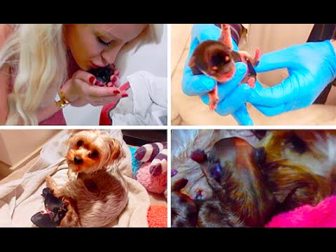 MY DOG GIVING BIRTH GRAPHIC Gigi