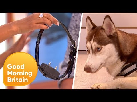 Xxx Mp4 Electric Dog Collars Should They Be Banned Good Morning Britain 3gp Sex