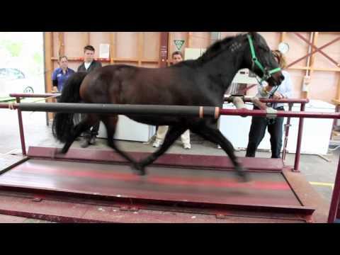 Xxx Mp4 Horse On A Treadmill 3gp Sex