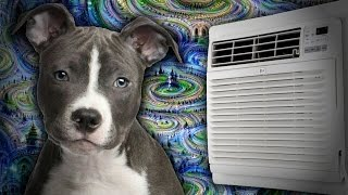 Dogs, AI, and Airconditioning.