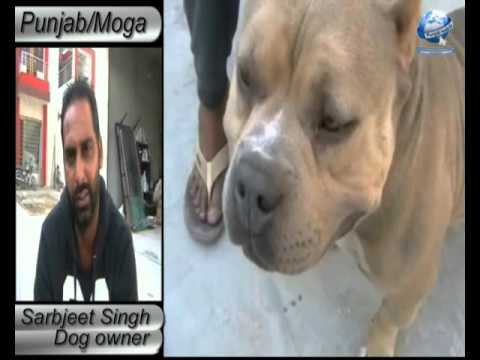 Amezing Dog  Value Price one Crore Rs