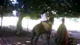 Le aprendendo a cavalgar e bebel correndo de medo rsrsrs.mp4