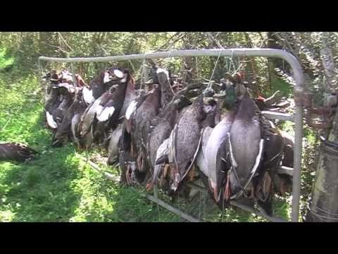 Duck hunting in New Zealand part 2