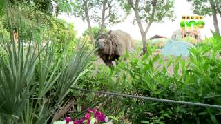 Al Bustan Zoological centre - Weekend Arabia 30-(3)