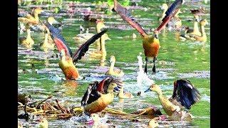 জাহাঙ্গীরনগর বিশ্ববিদ্যালয় | অতিথি পাখি | Otithi Pakhi | Dristipat 40 | দৃষ্টিপাত ৪০