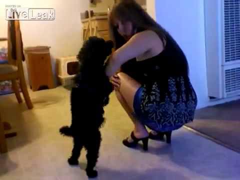 Il cane gioca con la padrona ma scatta una esilarante sorpresa