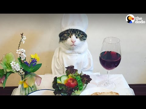 Xxx Mp4 Cat Poses With Dinner Every Single Night The Dodo 3gp Sex