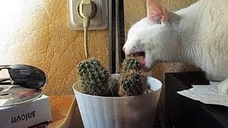 The funniest unexpected CAT MOMENTS on earth !