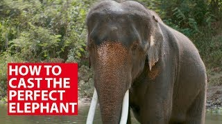 How To Cast The Perfect Elephant | Conversation With | CNA Insider