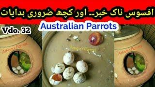 Best Info,  Sad News about Australian parrots, Best Tip for Matki in Urdu/Hindi by  Arham . Video.32