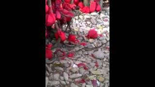 Shahpur manas mandhir nag devta live darshan