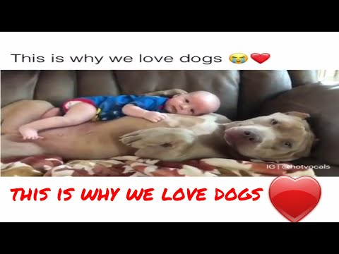 This is why we love dogs
