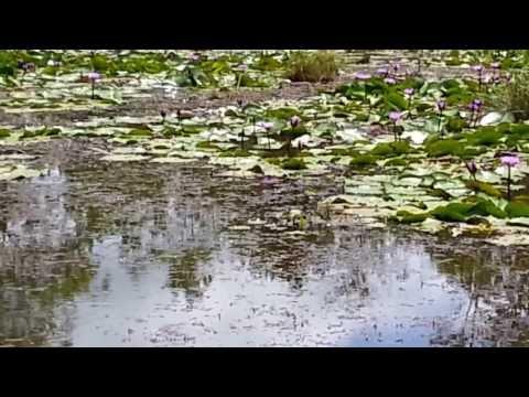 Xxx Mp4 Snakehead Topwater Strike Haruan 3gp Sex