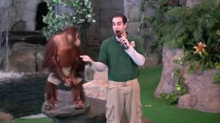 Orangutan Performs at Universal's Animal Actors Show