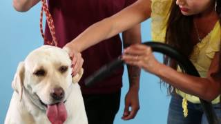 How to dry your dog with B-Air Fido Max 1 Dog Dryer and Andre Millan