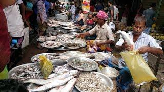 Incredible Big Fish Market Noya Bazar Old DHaka Bangladesh