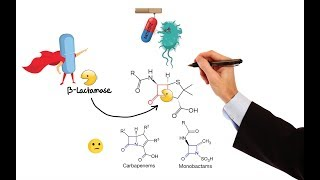 Pharmacology – ANTIBIOTICS – CELL WALL & MEMBRANE INHIBITORS (MADE EASY)