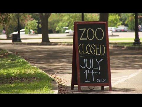 Xxx Mp4 Jaguar Escapes Habitat At Audubon Zoo Kills Animals 3gp Sex